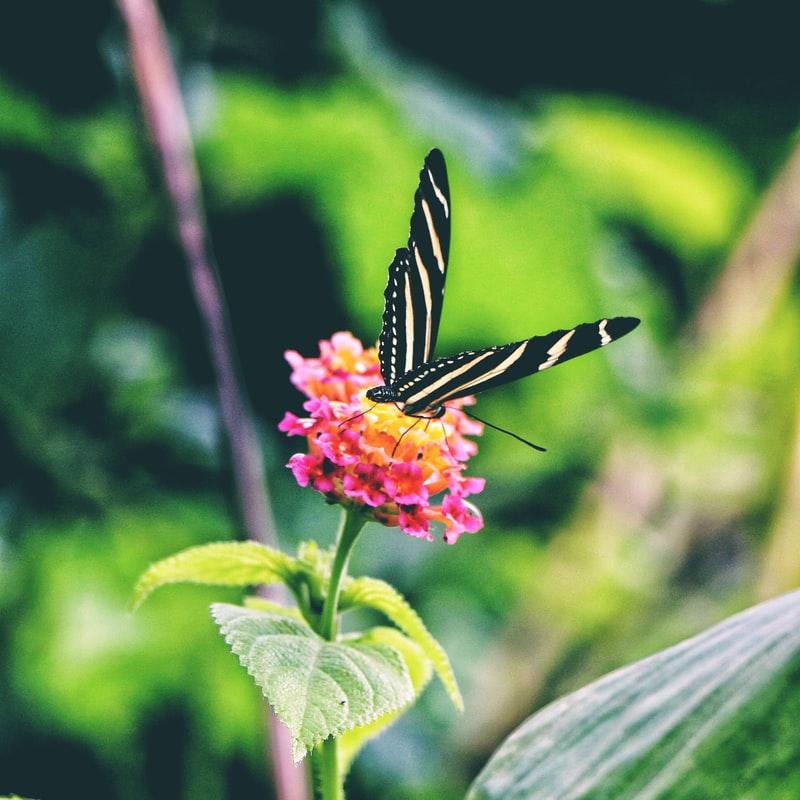 Vitality komplex patří do každé zahrady i domácnosti